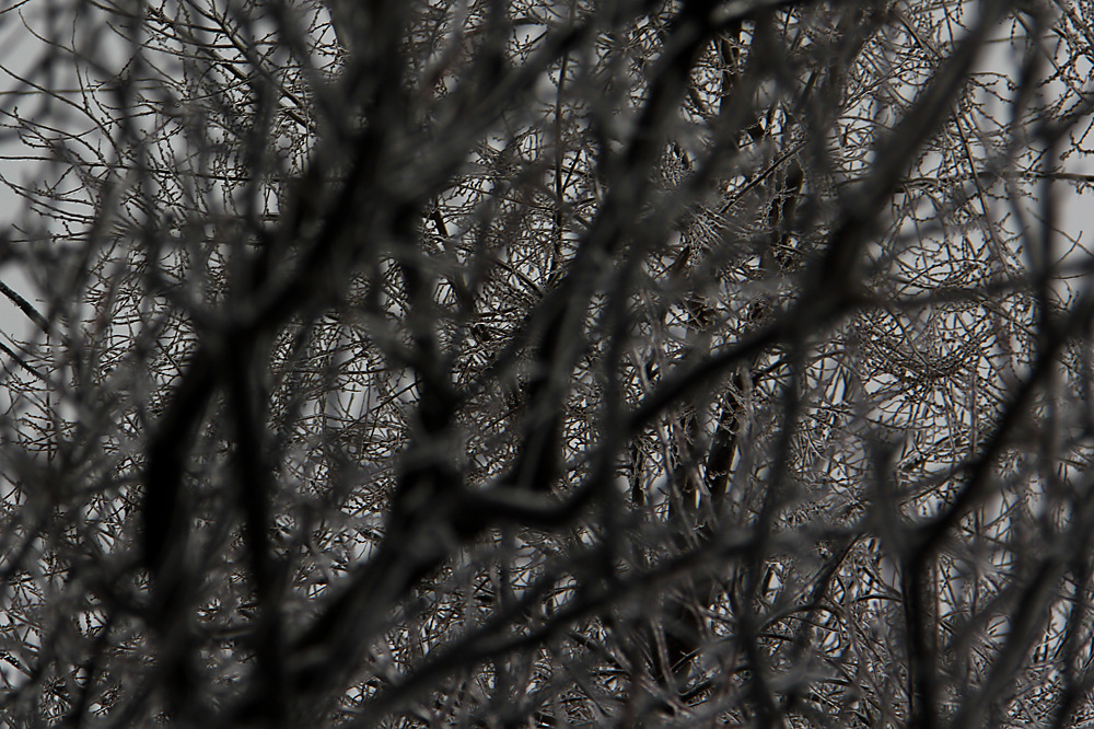 photoblog image Messy Icy Branches