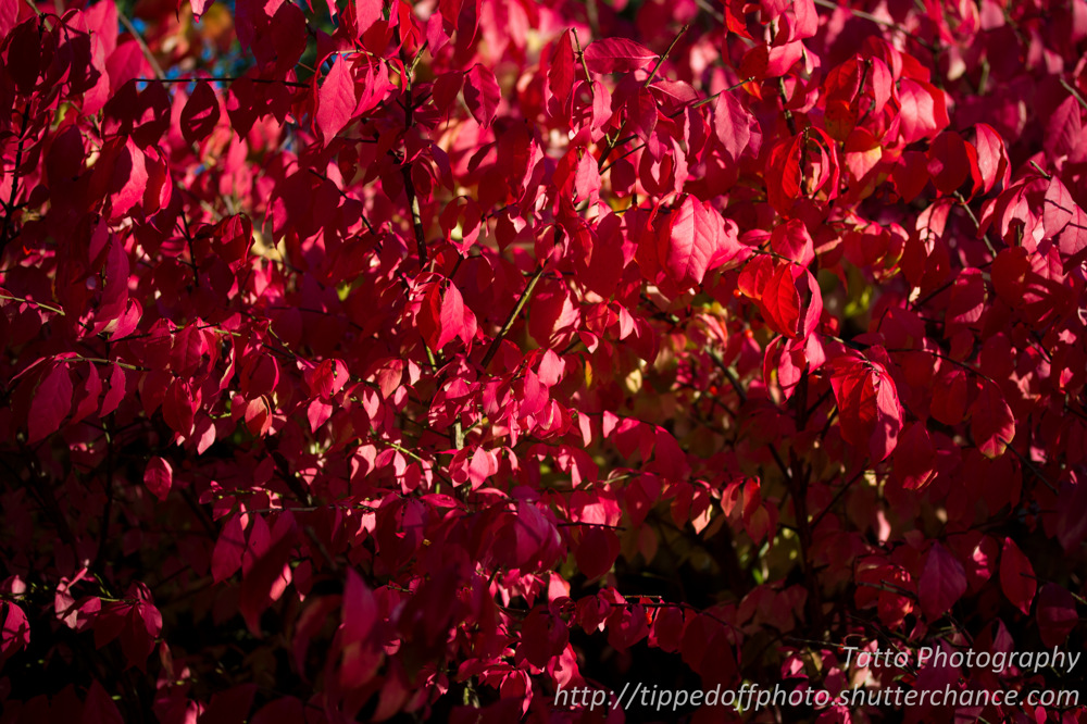 photoblog image Red Fall